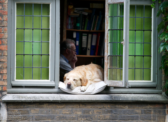 Dog in Window in Bruges, Belgium
