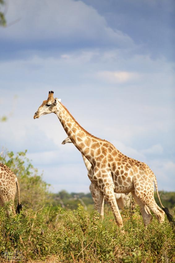 Tanzania and Victoria Falls Travel Photography